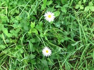 Whitegreen