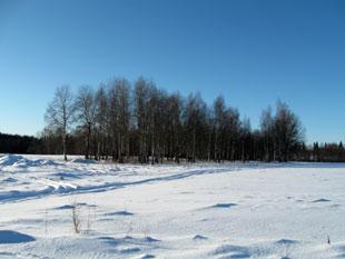 Naked forest border