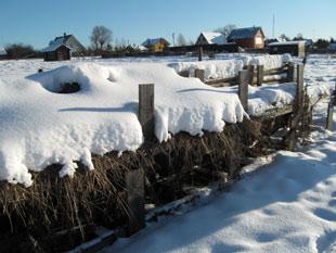 The hay under snow