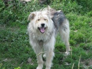 Пёс Валет: портреты